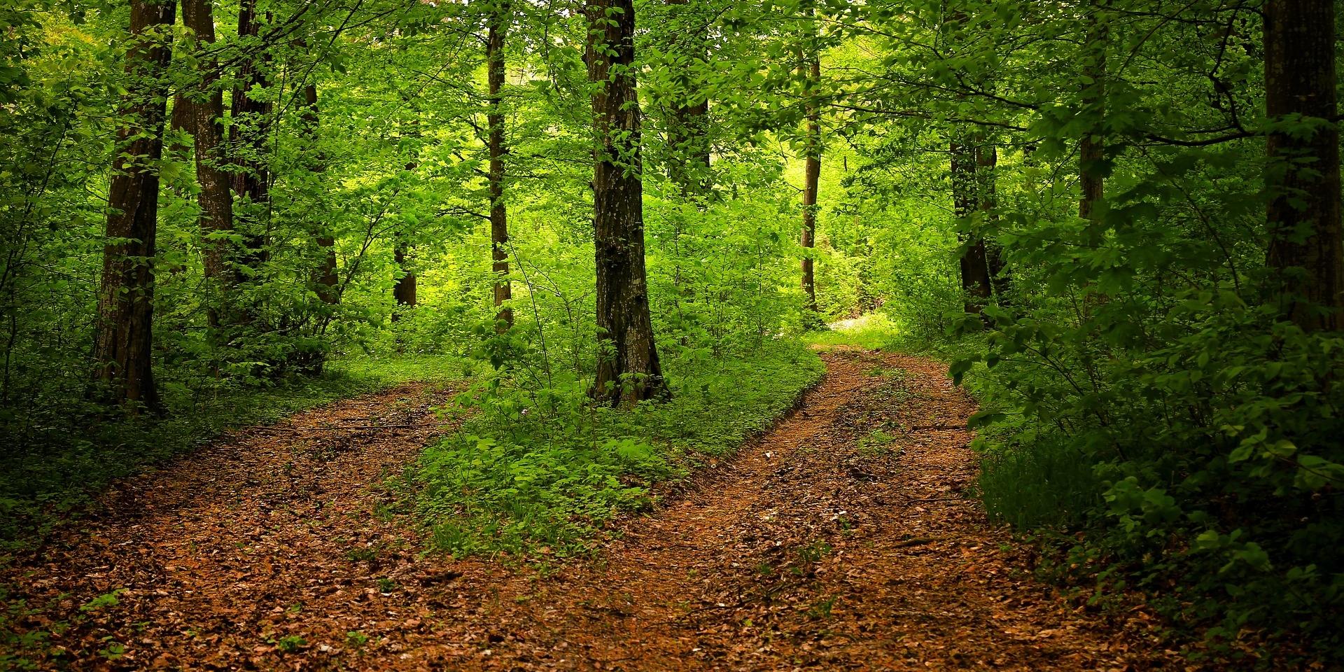 path-1345721_1920